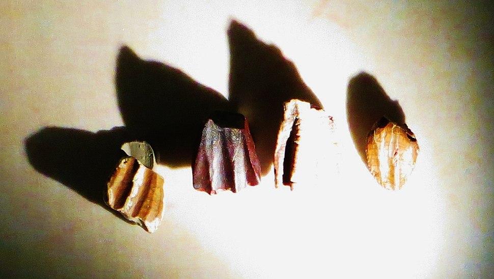 Ouranosaurus teeth 3