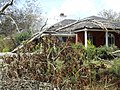 Overgrown House in Alabama Field.jpg