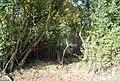 Overgrown bridge across the Medway - geograph.org.uk - 1549398.jpg