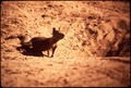 PLANES (USED BY CALIFORNIA FARM COMMISSION) DROP POISONED GRAIN ON ACTIVE SQUIRREL COLONIES IN ORDER - NARA - 542630.tif