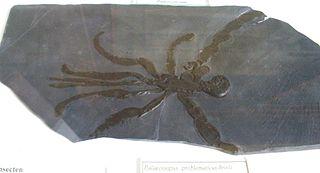 Palaeoisopus Extinct genus of sea spiders