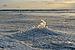 Paldiski bay ice formation3.jpg