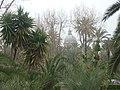 Palermo - panoramio - Dawid Glawdzin (4).jpg