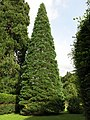 Parc Fenestre (isolated Sequoiadendron giganteum).jpg