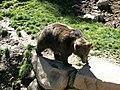Parc animalier Aran Park de Bossòst 05.jpg