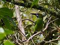 Parque Quetzales, Costa Rica (14137935237).jpg