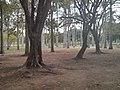 Parque del Este .jpg