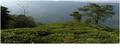Peaceful Tea Garden at Takdah- Dabapani.png