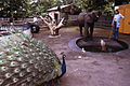 Peacock and Elephant at the Franklin Park Zoo (8610211546).jpg