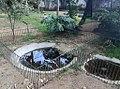Pelomedusa subrufa - Arusha botanical gardens 3.jpg