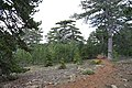 Persephone Nature Trail, Troodos, Cyprus - panoramio (30).jpg