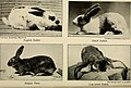 Pets and how to care for them (1921) (14595980427).jpg