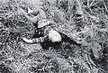Phong Nhi massacre 2.jpg