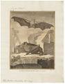 Phyllostoma hastatum - 1700-1880 - Print - Iconographia Zoologica - Special Collections University of Amsterdam - UBA01 IZ20700093.tif