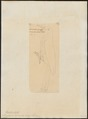 Picolaptes squamatus - 1820-1821 - Print - Iconographia Zoologica - Special Collections University of Amsterdam - UBA01 IZ19200267.tif