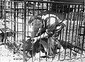 PikiWiki Israel 2553 Kibutz Gan-Shmuel sb9- 51 גן-שמואל-ברפת 1955-60.jpg