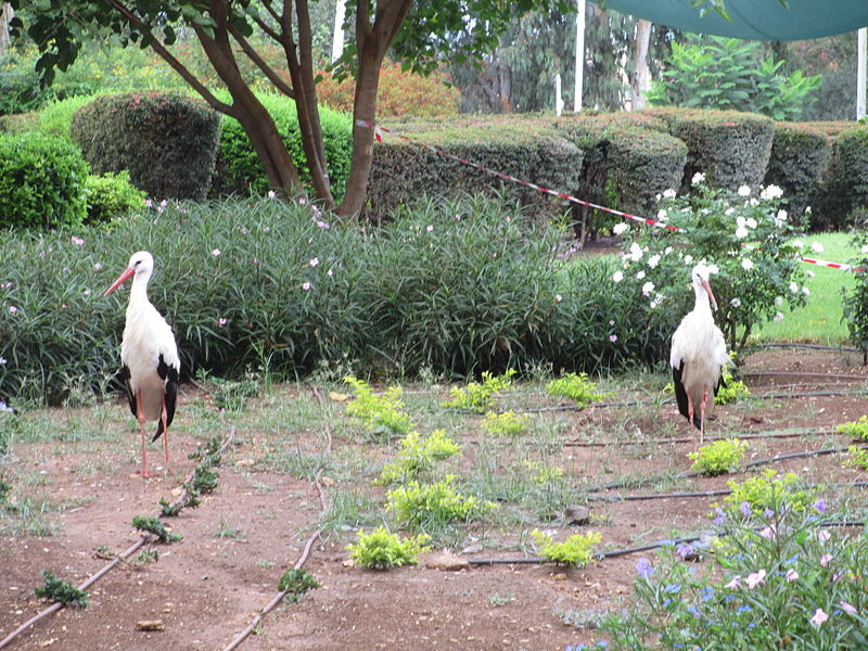 חסידות בגן הבוטני זואולוגי נהריה