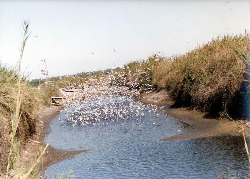 ציפורים בנחל