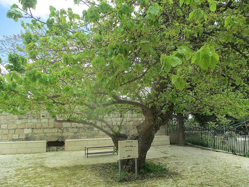 עץ החיים על שם אלי ויזל