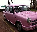 Pink Ambassador.jpg