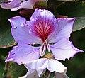 Pink Flower (3308570031).jpg