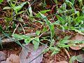 Plants kerala.jpg