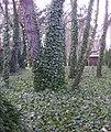 Poland. Gardens 002.JPG