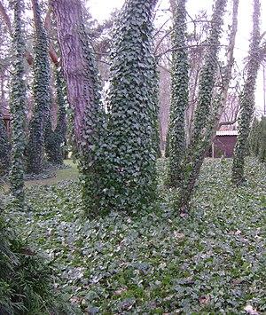 Poland. Garden.
