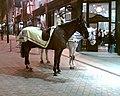 Police horses (91544746).jpg