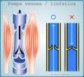 Pompe venosa - linfatiche.png