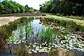 """Pond at the heather """"Kleine Kweek"""" Warnsborn Schaarsbergen - panoramio.jpg"""