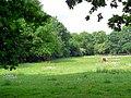 Pony Paddock - geograph.org.uk - 451090.jpg