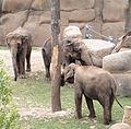 Prague Zoo - elephants 2.jpg