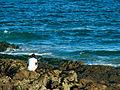 Praia do Jardim dos Namorados - Salvador 1.jpg