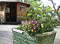 Primavera a Draga Sant'Elia - panoramio.jpg