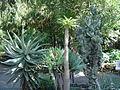 Puerto de la Cruz (Jardin Botanico) 11.jpg