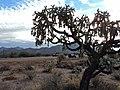 RANCHO SAN EMETERIO SONORA MEXICO - panoramio.jpg