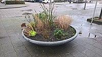 Radijs in a planter, Hillegersberg, Rotterdam (2021) 01.jpg