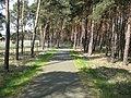 Radweg Dornswalde - Radeland - panoramio.jpg