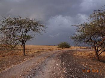 Rain clouds gather over the Velavadar Blacbuck National Park.jpg