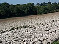 Recently ploughed field near Vernham Dean - geograph.org.uk - 981949.jpg