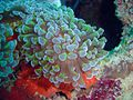 Reef0836 - Flickr - NOAA Photo Library.jpg
