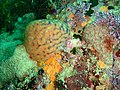 Reef assemblage at Rheeder's Reef P2277153.JPG