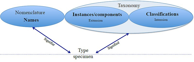 Relationship of taxonomy and nomenclature.jpg