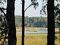 Rezerwat Imielty Ług.JPG