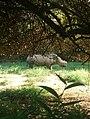 Rhino at park.jpg