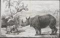 Rhinoceros indicus - 1700-1880 - Print - Iconographia Zoologica - Special Collections University of Amsterdam - UBA01 IZ22000183.tif