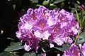 Rhododendronpark Bremen 20090513 254.JPG