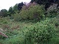 Rhoscrowther gardens - geograph.org.uk - 1337854.jpg