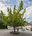 Ringve botaniske hage foto-Åge Hojem, NTNU Vitenskapsmuseet dsc9324 (15100600117).jpg